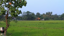 rice fields. shot from inside a moving car.